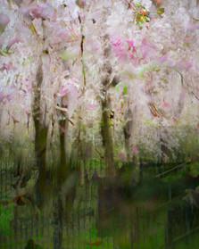 Blossom_#3.jpg