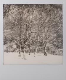 Polaroid_18.jpg