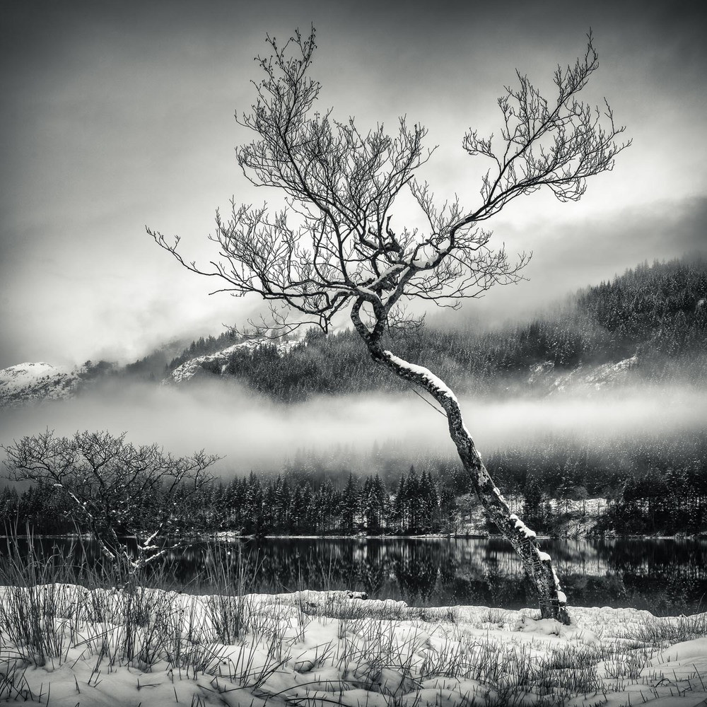 Chon Tree-2.jpg