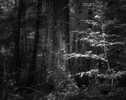 Infrared_23.jpg
