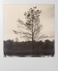 Polaroid_01.jpg