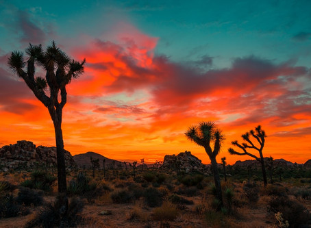 Joshua Tree National Park Visitor's Guide