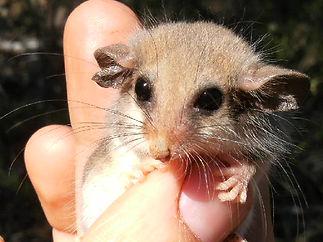 small mammal.jpg