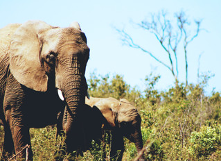 Ending the Cruel Wildlife Trade