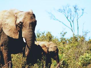 Ending the Cruel Wildlife Trade