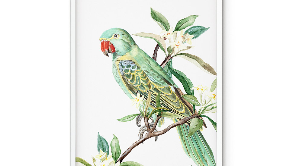 Water colour Print Green Parrot A5