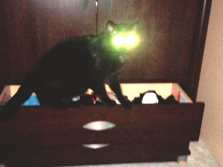 Watch how the cat vomits and its eyes glow animal videosCat vomiting and cat eyes glowing