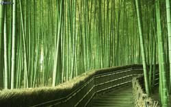 bosque-de-bambu,-acera,-escalera-184125