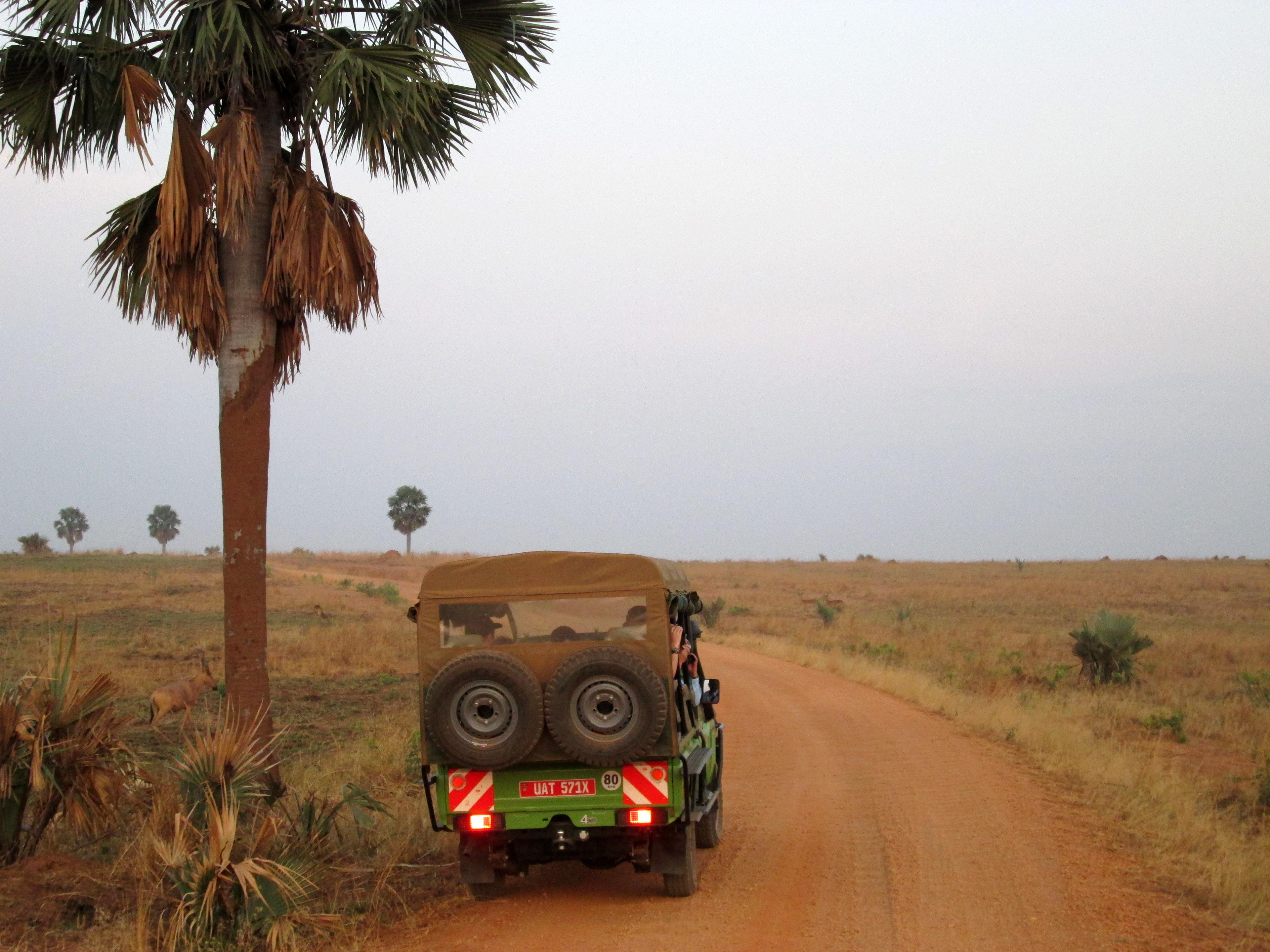 Safari im National Parc