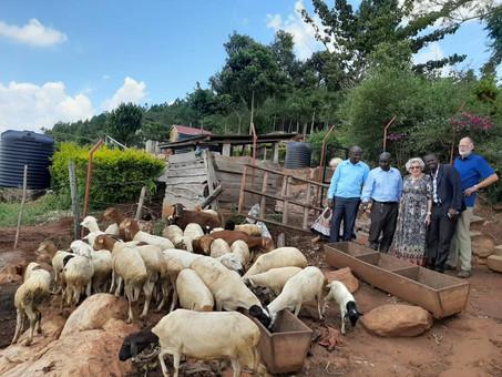 Schafe auf dem Gebetsberg