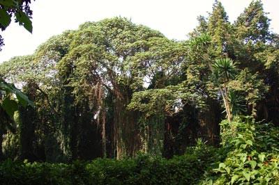 Voli Ausflug - Botanischer Garten Entebbe