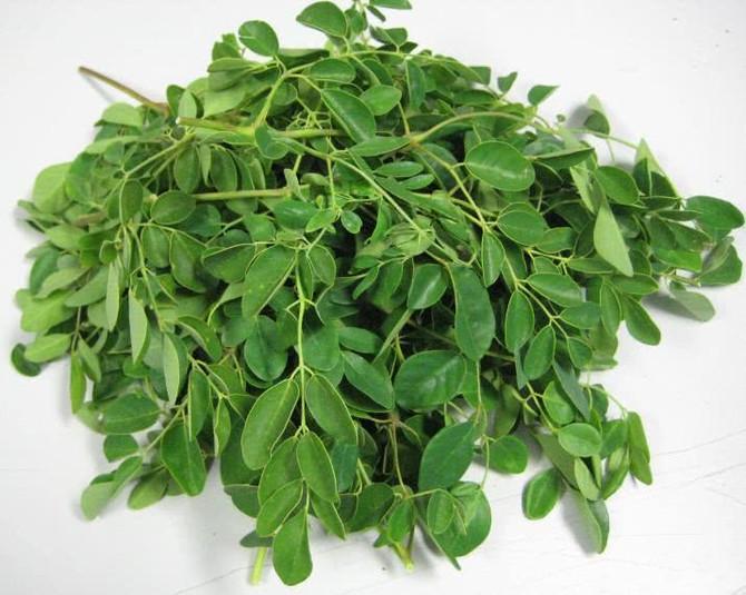 Moringa – A planta medicinal