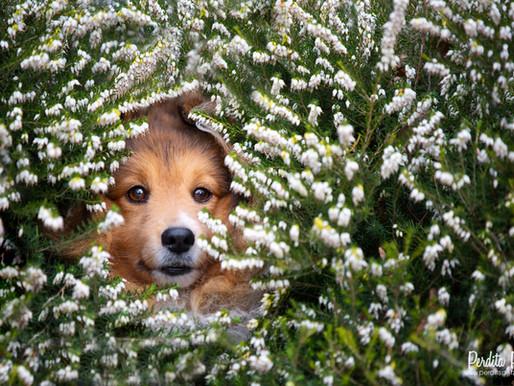 Ein paar Gedanken zur Haustierfotografie