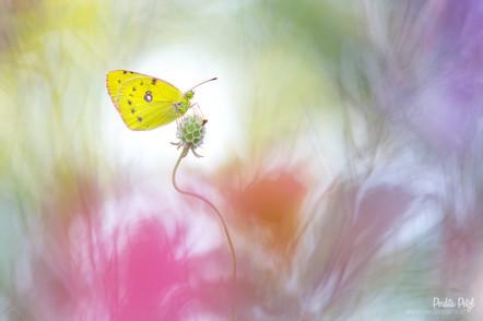 Schmetterling   Makro    Foto-Workshop   Perdita Petzl   Wien