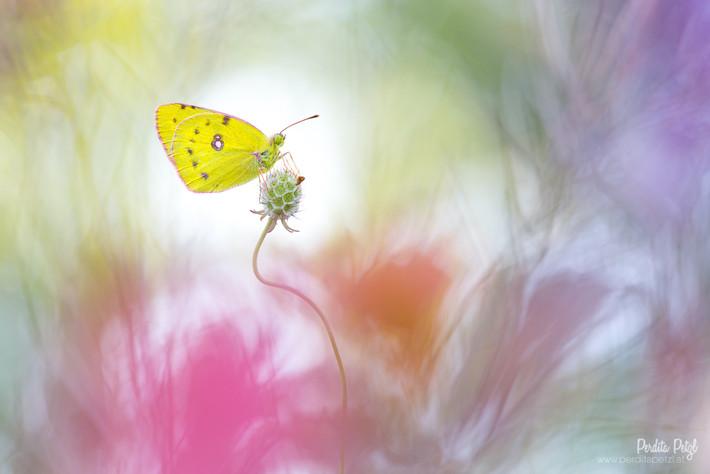 Schmetterling | Makro |  Foto-Workshop | Perdita Petzl | Wien