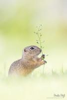 Ziesel   Wildlife    Foto-Workshop   Perdita Petzl   Wien