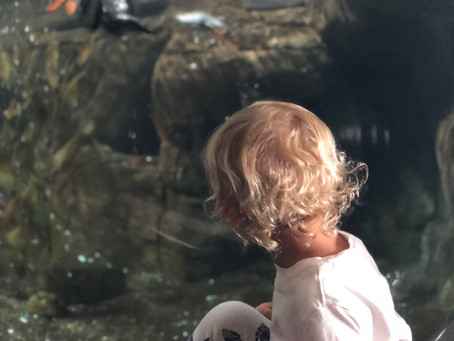 A Day at the Monterey Bay Aquarium