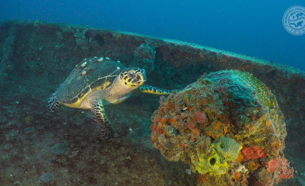 Turtle on the Duane Wreck
