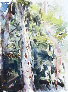 Trees for Forest 1