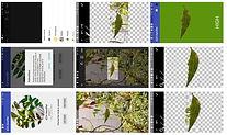 Figure3_edited_edited.jpg