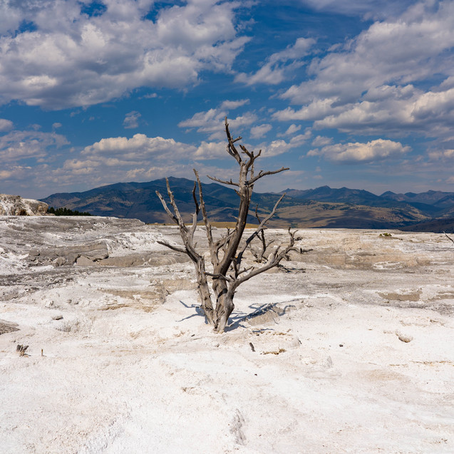 Yellowstone, 2020