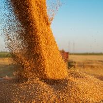 Burdekin Grain Storage Business Case