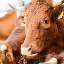 Competitive Neutrality Assessment of Wangaratta Livestock Exchange