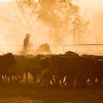 Cattle Market Feasibility Study