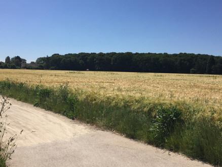 vélo à travers champs