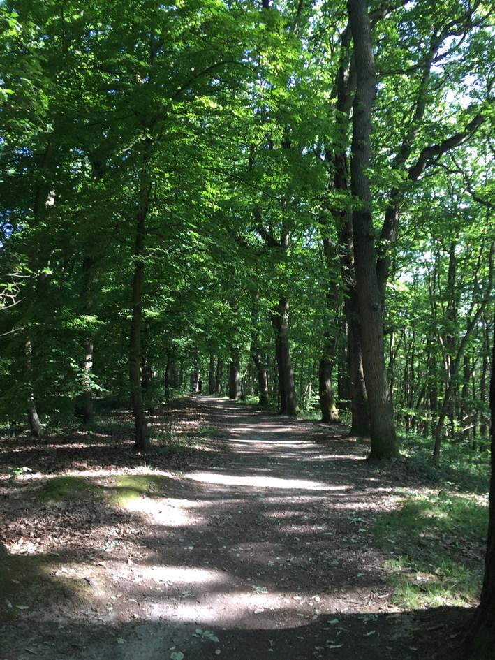 forêt magny les hameaux