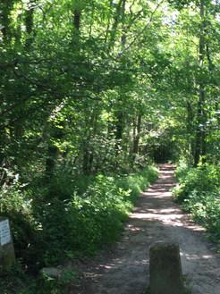 chemin Racine