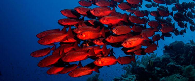 red sea brothers bigeyes.jpg