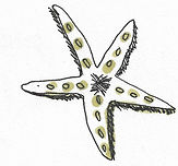 étoile de mer.jpg