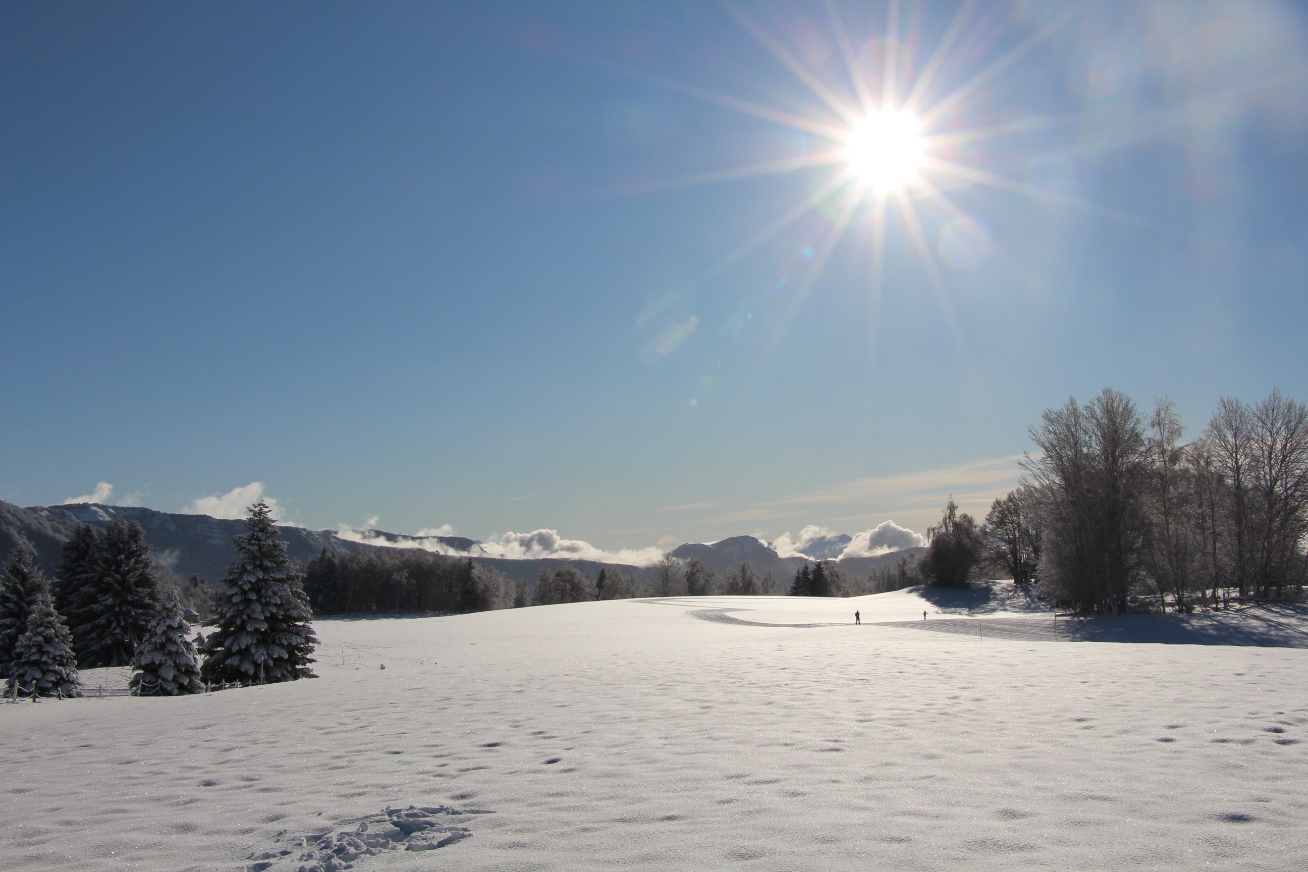 Snowland 2020 LQ (1)