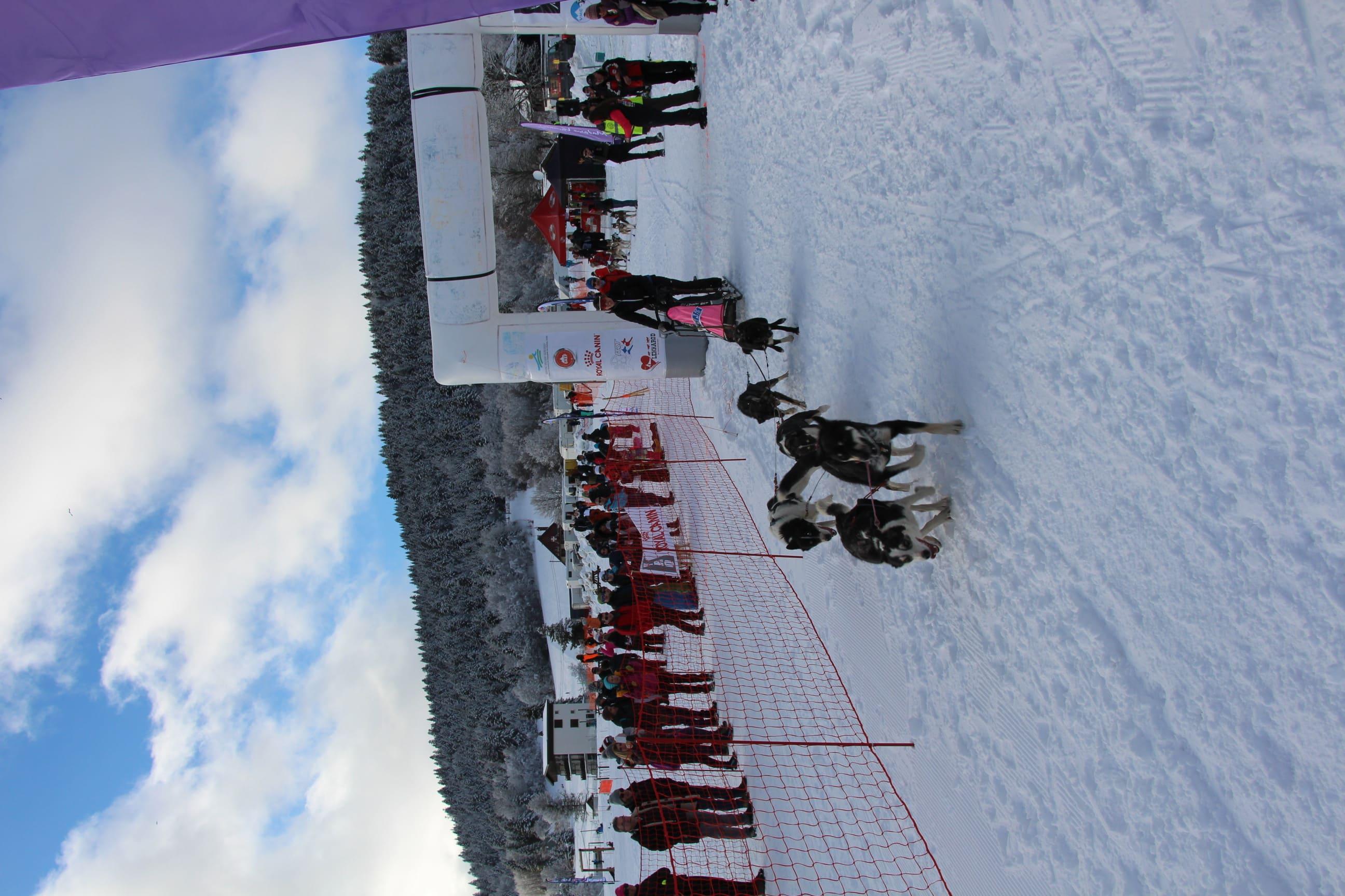 Snowland 2020 LQ (90)