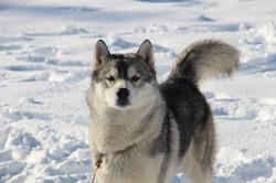 Snowland 2020 LQ (14)