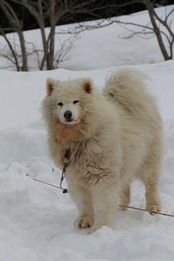 Snowland-2019-LQ 084
