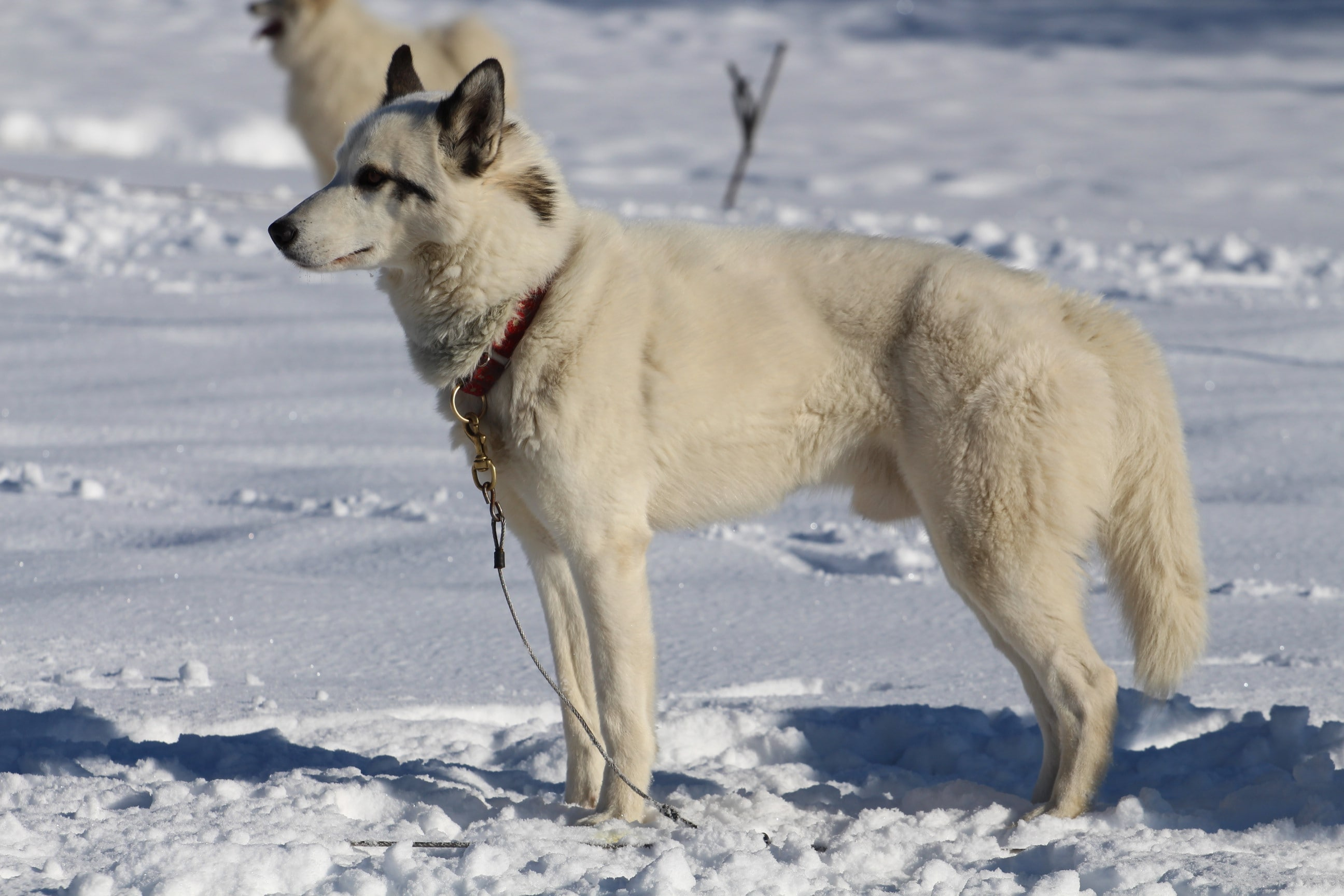Snowland 2020 LQ (19)
