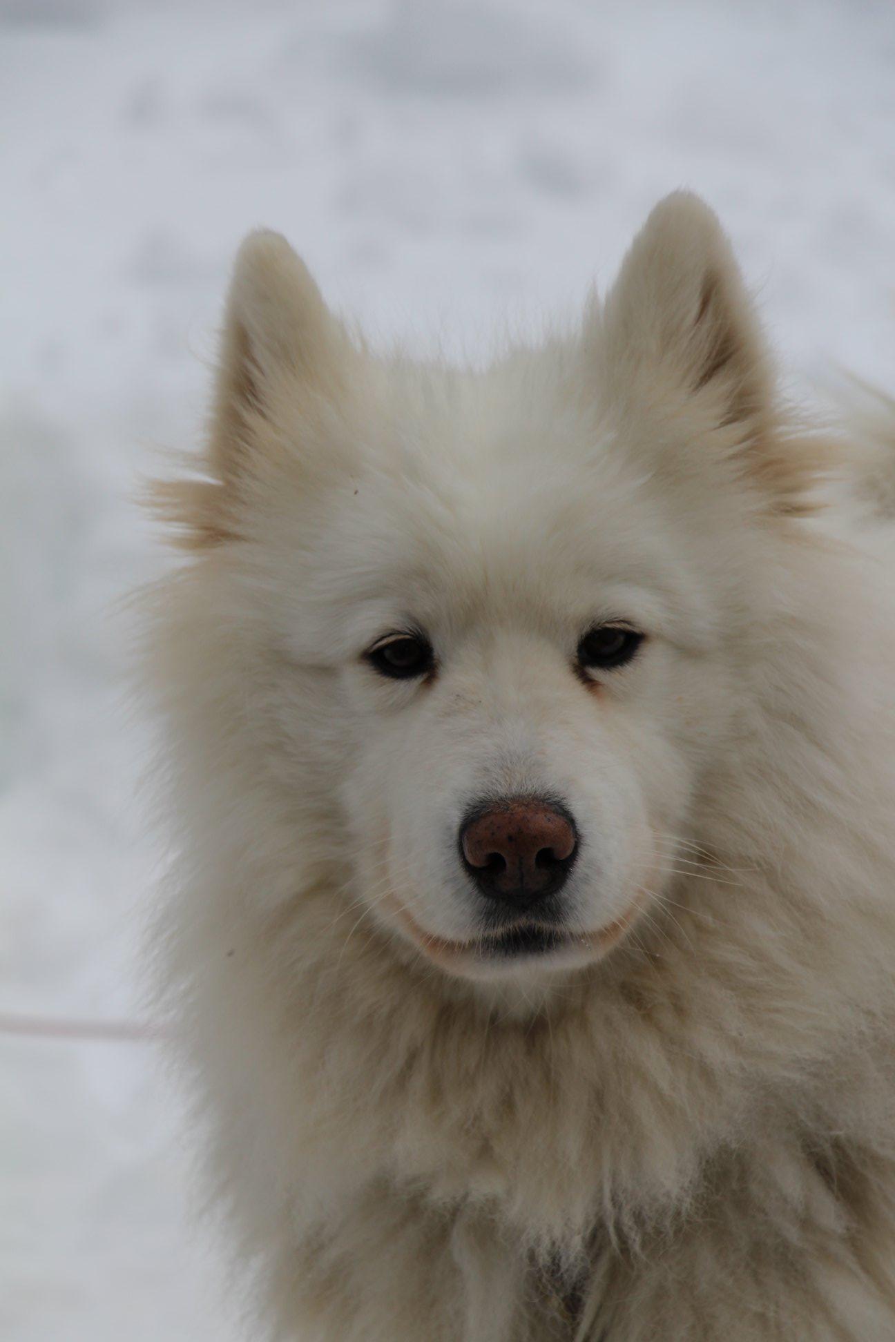 Snowland-2019-LQ 091
