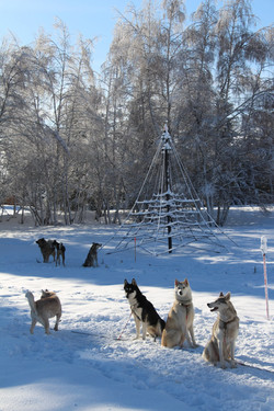 Snowland 2020 LQ (15)
