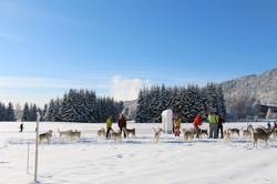 Snowland 2020 LQ (2)