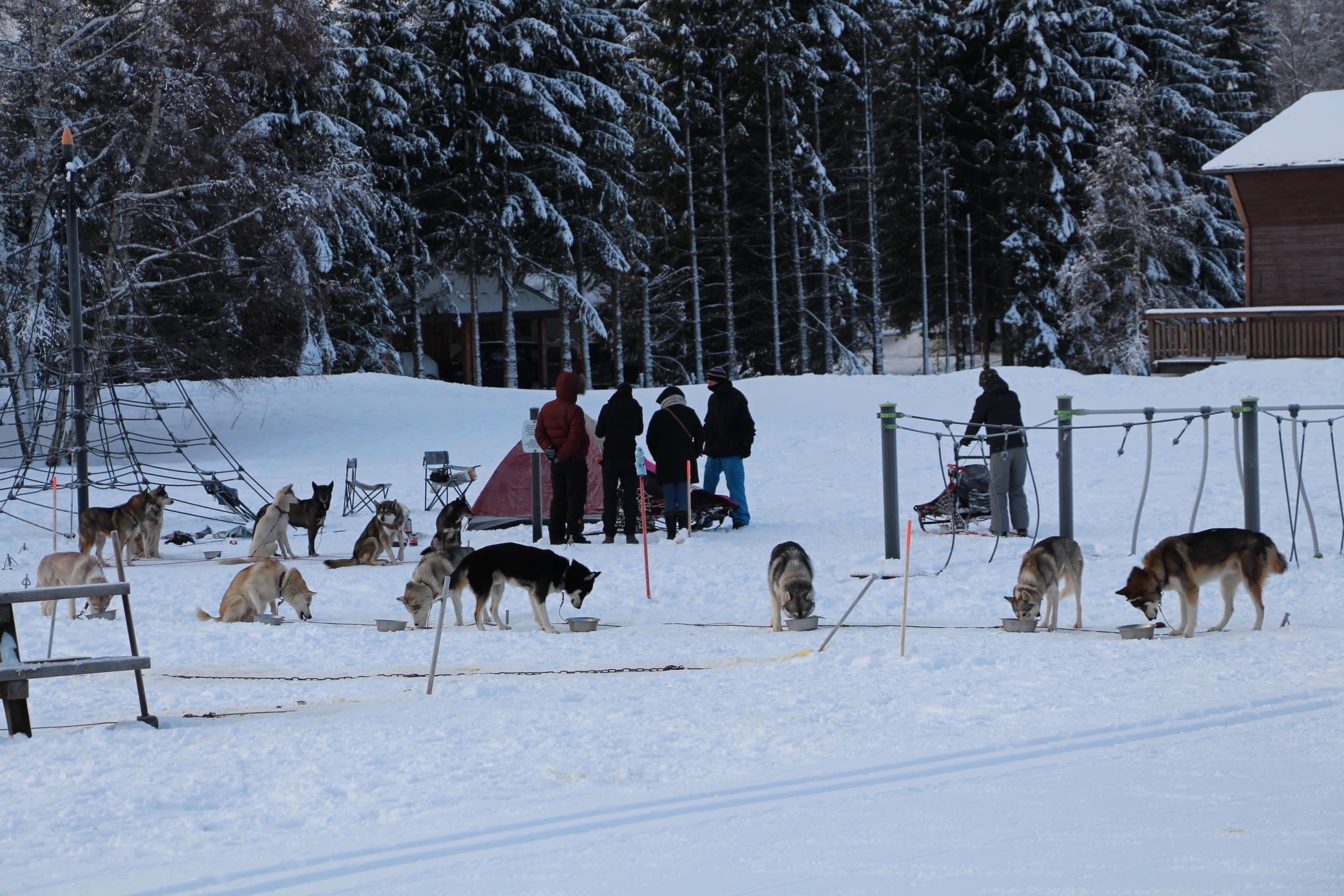 Snowland 2020 LQ (175)