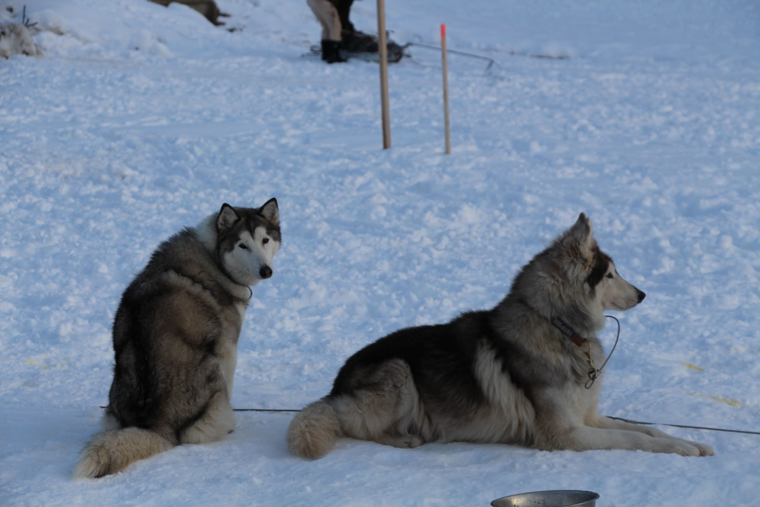 Snowland 2020 LQ (172)