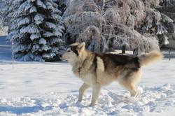 Snowland 2020 LQ (5)