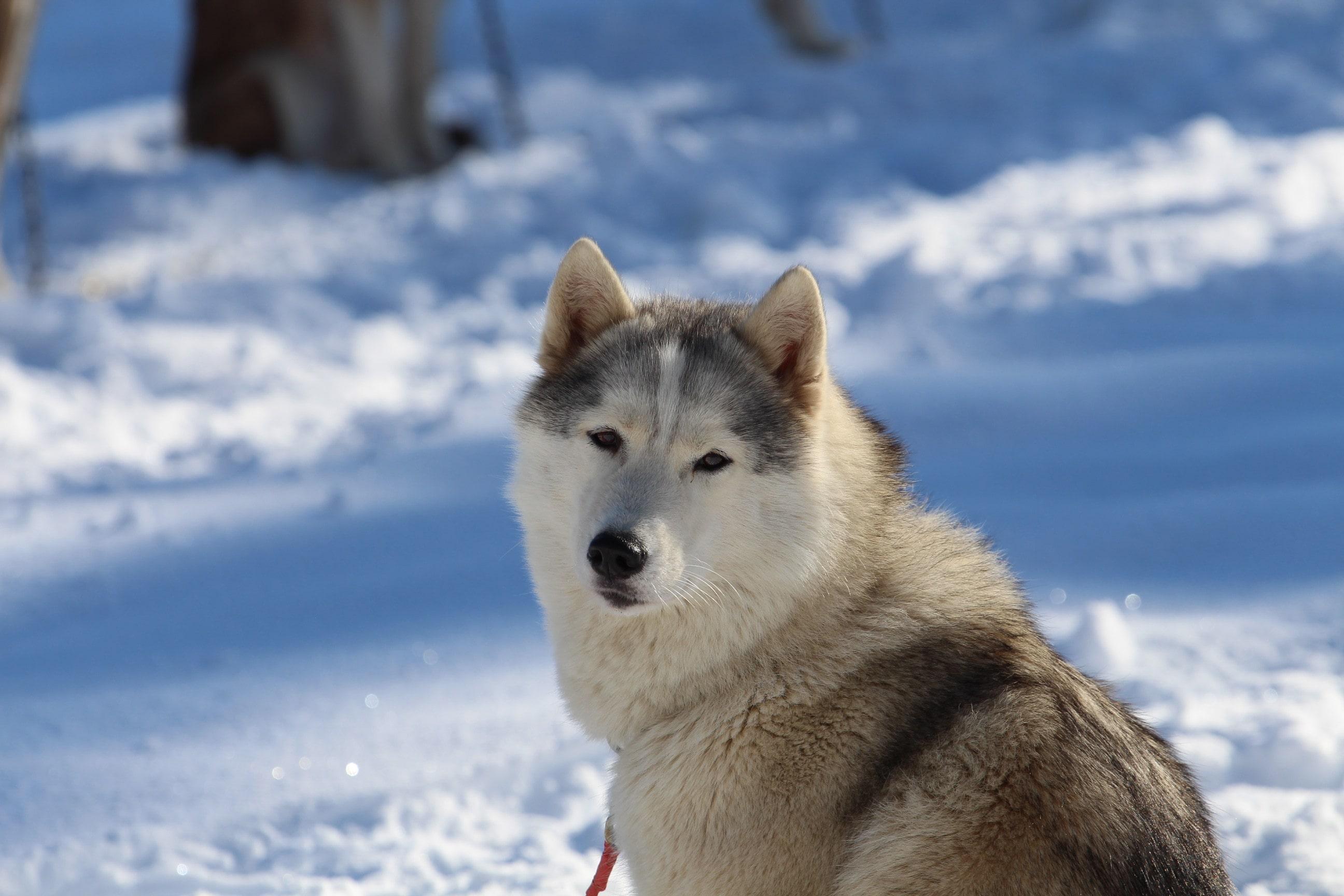 Snowland 2020 LQ (11)