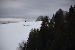 Snowland-2019-LQ 096