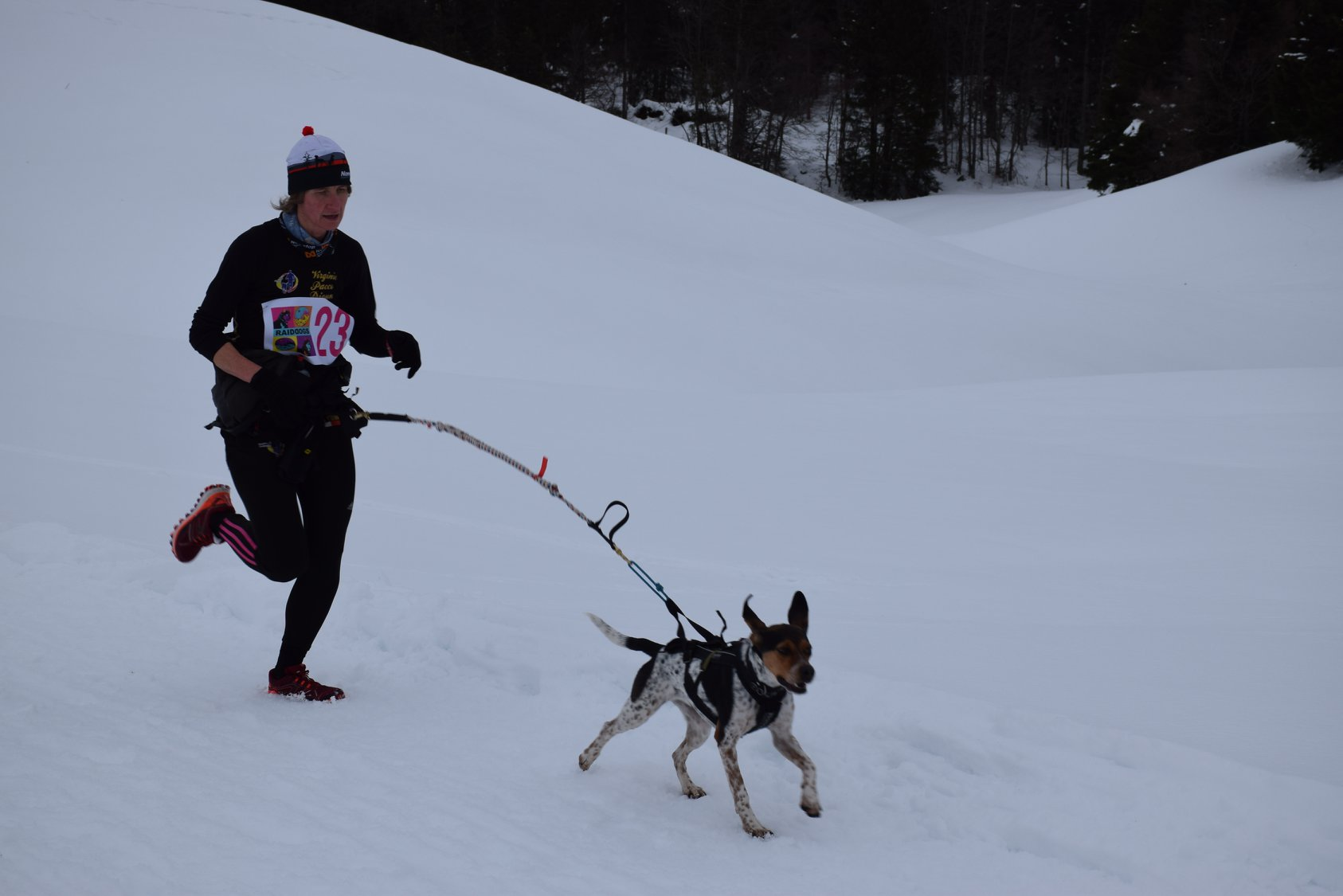 Snowland-2019-LQ 275