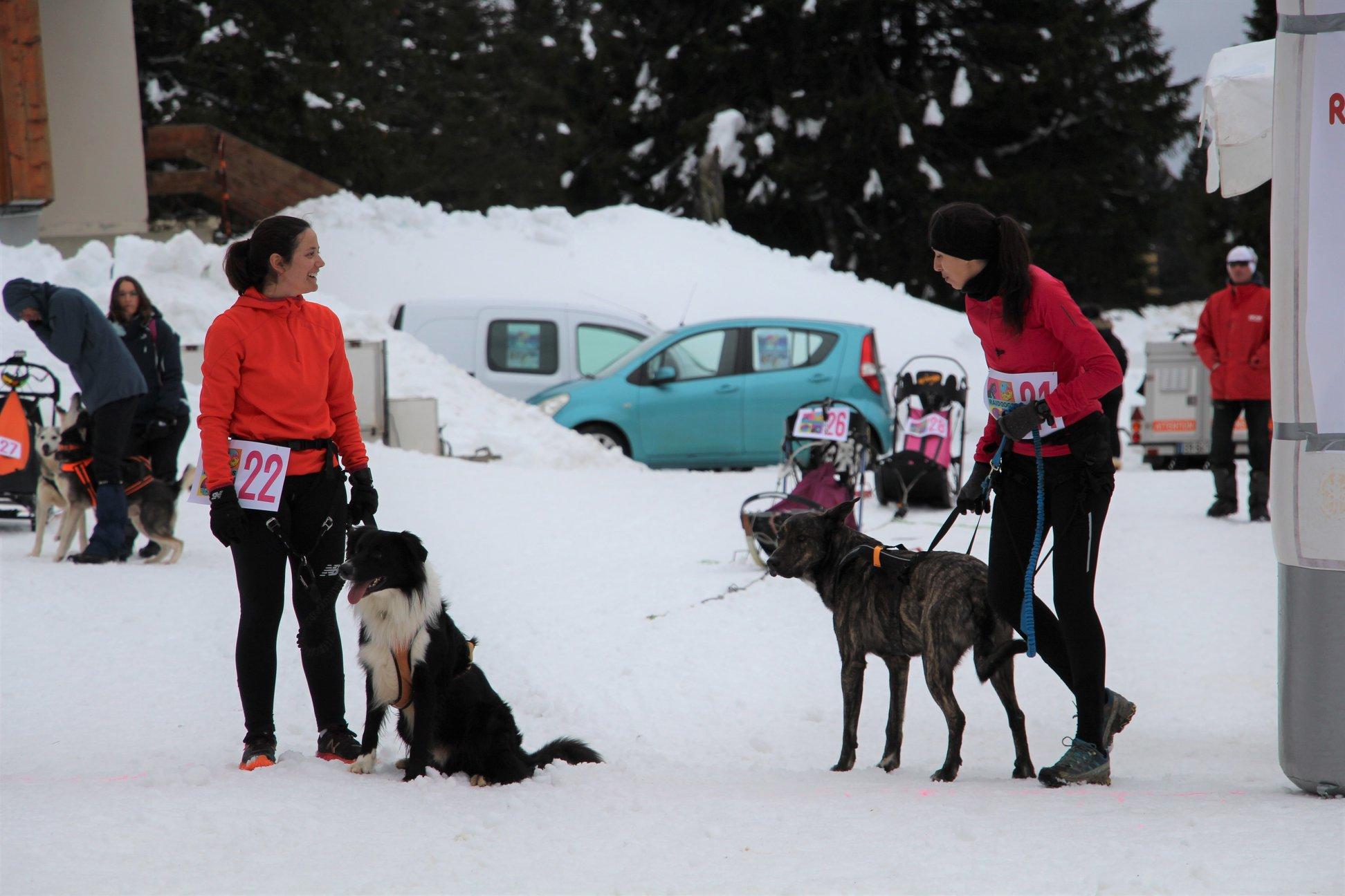 Snowland-2019-LQ 246