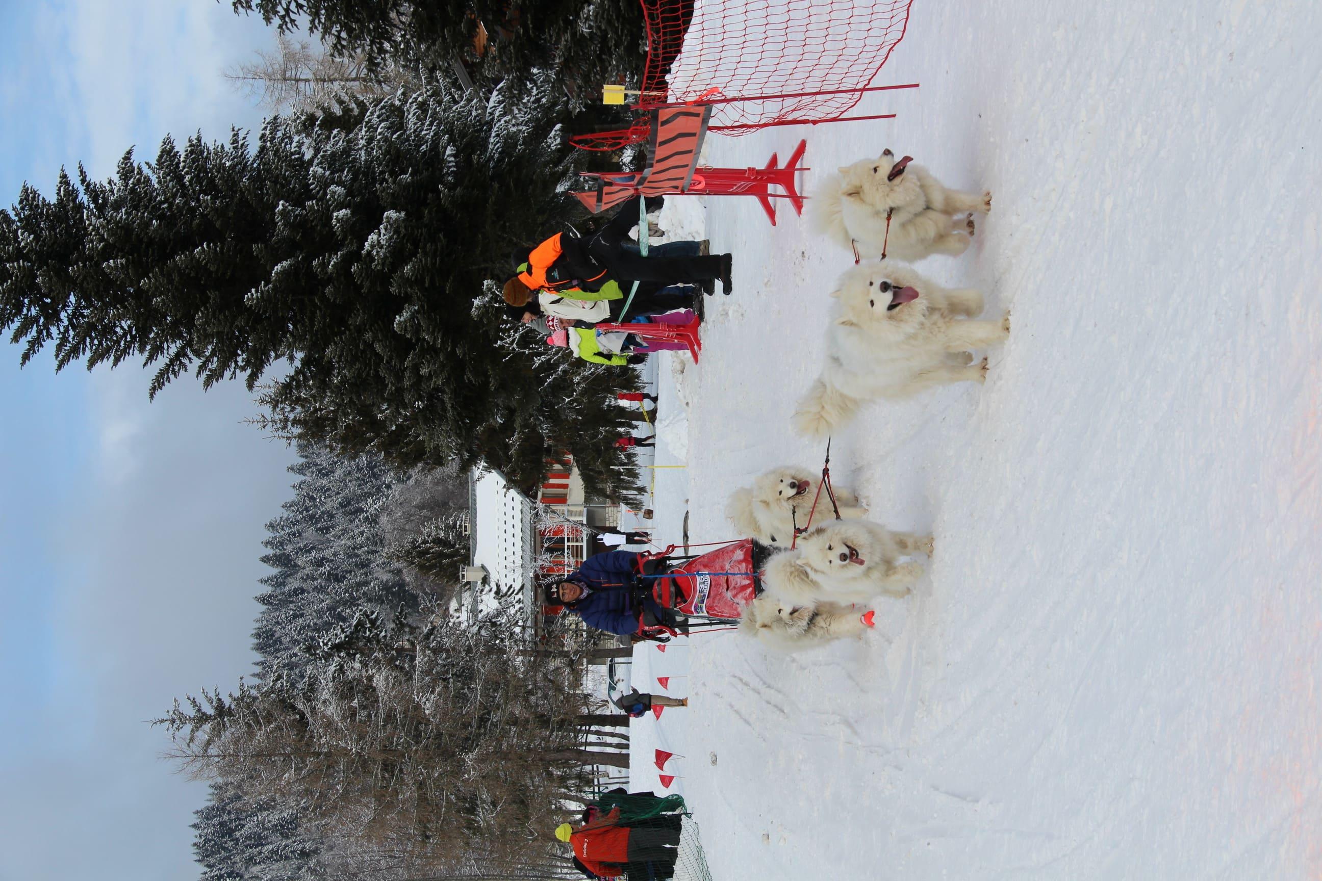 Snowland 2020 LQ (281)
