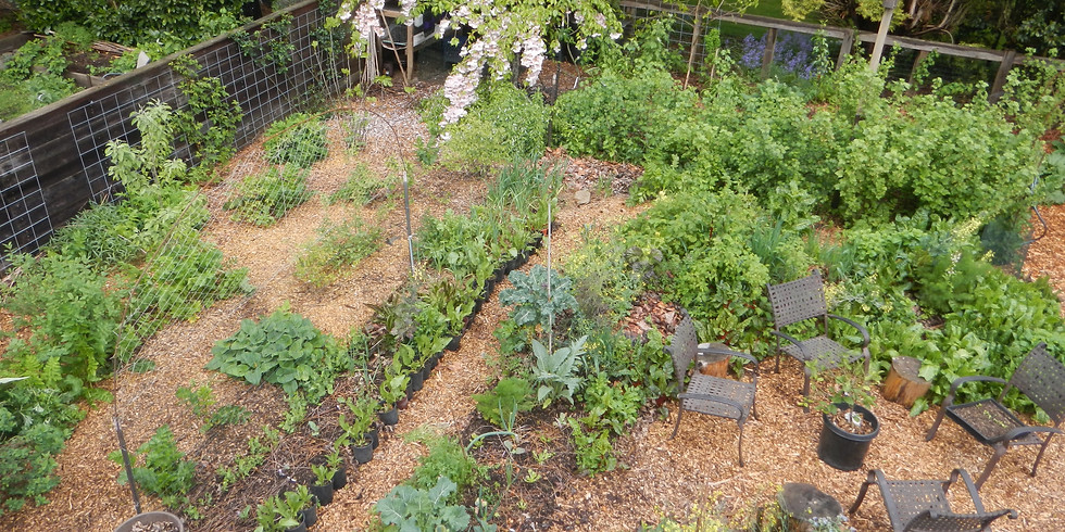 Grow Your Own Produce:  The Workshop Series